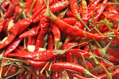 Pickled  chili pepper Stock Photo