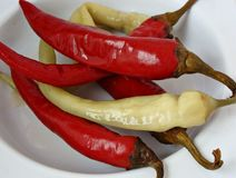 Pickled chili peppers. Romanian pickled chili peppers in vinegar Stock Photography