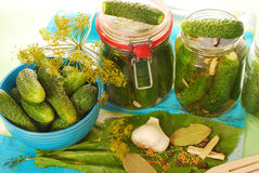 Pickled cucumbers. Preparing preserves of pickled cucumbers in jars with spices and herbs Stock Images