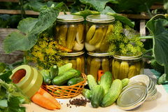 Pickled cucumbers. Preparing preserves of pickled cucumbers Royalty Free Stock Photos