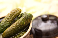 Pickled cucumbers Stock Images