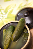 Pickled cucumbers. Homemade pickled cucumbers in ceramic jar Stock Photography