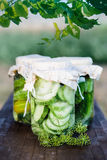 Pickled cucumbers made with home garden vegetables Stock Images