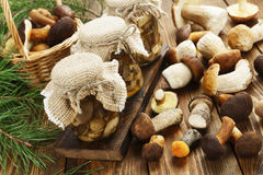 Pickled and fresh mushrooms Stock Images