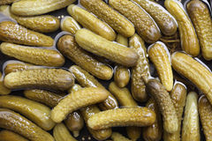 Pickled gherkins. Background. Close-up Royalty Free Stock Photos
