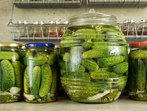 Pickled green cucumbers. In glass jars on kitchen countertop Stock Images