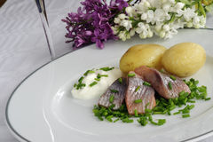 Pickled herring. With new potatoes plus sour cream and chopped chives Stock Images