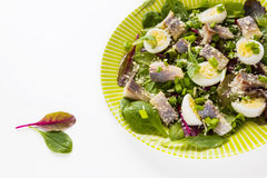 Pickled herring, mix of green salad, onion, boiled quail eggs and grated parmesan cheese with lemon juice and olive oil Royalty Free Stock Images