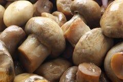 Free Pickled Mushrooms Stock Photos - 7706663