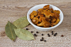 Pickled mushrooms in a white Cup and spices. Pepper and bay leaf Royalty Free Stock Images
