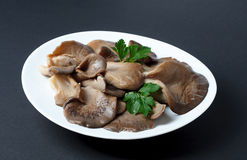 Pickled Oyster Mushrooms with parsley leaf on a plate Stock Photo