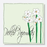 Pickled paperwhites flowers Stock Photography