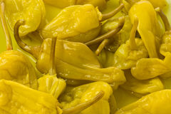 Pickled Peppers Stock Image