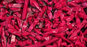 Pickled red cabbage Stock Image