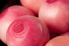 Pickled red onions Stock Photos