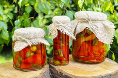 Pickled red peppers Stock Photos