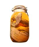 Pickled snake in a bottle Stock Image