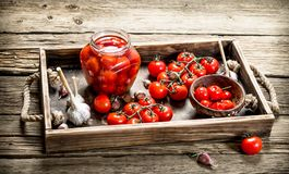 Pickled tomatoes with garlic and spices royalty free stock images