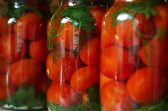 Pickled Tomatoes. Three jars of canned tomatoes lined in a row Stock Images
