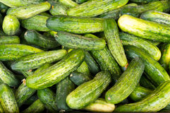 Pickles on display Royalty Free Stock Images