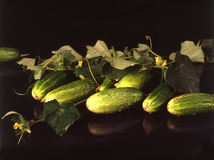Pickles with leaves and  yelow flowers Stock Image