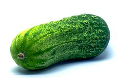 Pickling cucumber on a white background. A pickling cucumber rests on a white background royalty free stock photography