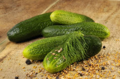 Pickling cucumbers Stock Images