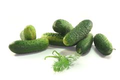 Pickling cucumbers Royalty Free Stock Images