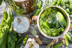 Pickling cucumbers in the countryside Stock Photos