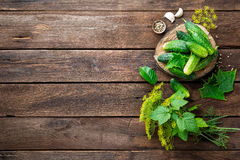 Pickling cucumbers Stock Photos