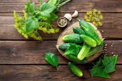 Pickling cucumbers Stock Photo