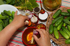 Pickling cucumbers, pickling - hands close-up, cucumber, herbs, Stock Photography