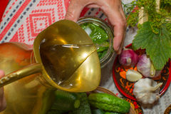 Pickling cucumbers, pickling - hands close-up, cucumber, herbs,. Russian style. Recipes, step execution. Harvesting vegetables in store Royalty Free Stock Image