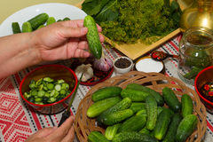 Pickling cucumbers, pickling - hands close-up, cucumber, herbs, Royalty Free Stock Photo
