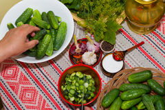 Pickling cucumbers, pickling - hands close-up, cucumber, herbs, Royalty Free Stock Photos