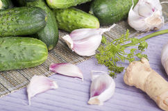 Pickling cucumbers Royalty Free Stock Photography