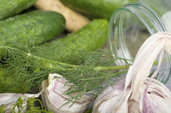 Pickling cucumbers Stock Image