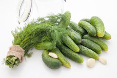 Pickling cucumbers Royalty Free Stock Photos