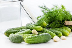 Pickling cucumbers Royalty Free Stock Image