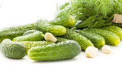 Pickling cucumbers Stock Photo