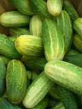 Pickling Cukes. Cucumbers at market Royalty Free Stock Photo
