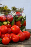 Pickling of tomatoes Stock Photos
