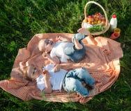 Picknick Royalty-vrije Stock Fotografie