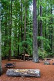 Picknick in de Californische sequoia's royalty-vrije stock afbeelding