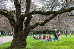 Picknick door de Universitaire Bomen van de Kers Royalty-vrije Stock Foto's