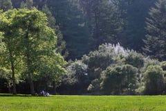 Picknick in het park Royalty-vrije Stock Afbeeldingen