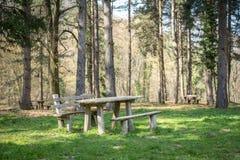 Picknick i en skog Arkivbild