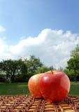 Picknick im Park Lizenzfreies Stockbild