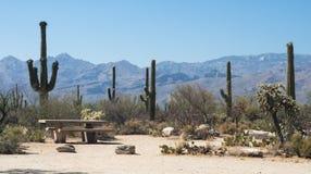 Picknick med kaktuns Arkivbilder