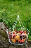 Picknick mit Mischbeeren und Früchten Stockbild